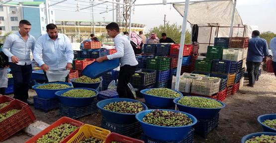 Urfa'da kaliteli zeytin için dernek kuruldu