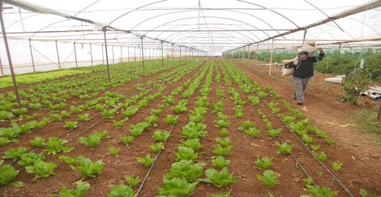 Urfa'da kış çiftliği artıyor