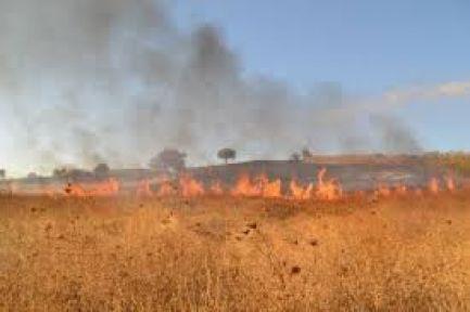 Urfa'da korkutan anız yangını