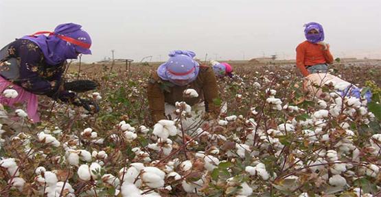 Urfa'da mevsimlik işçi ücretleri açıklandı