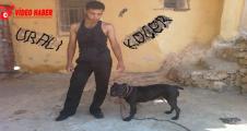 Urfa'da Bar cinayeti, 1 ölü, 1 yaralı
