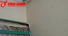 Urfa'da sinek istilası evlere dadandı