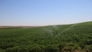 Bozova Pompaj Sulamaları İle Toprağın Verimi Artacak…
