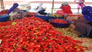 Urfa'da İSOT Telaşı Başladı