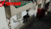 Şanlıurfa'da 220 polisle operasyon