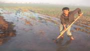 Şanlıurfalı Çiftçilerin Sıcakla İmtihanı