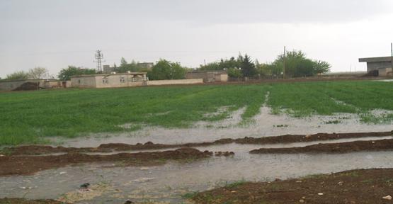 Yağmur çiftçilerinin yüzünü güldürdü.